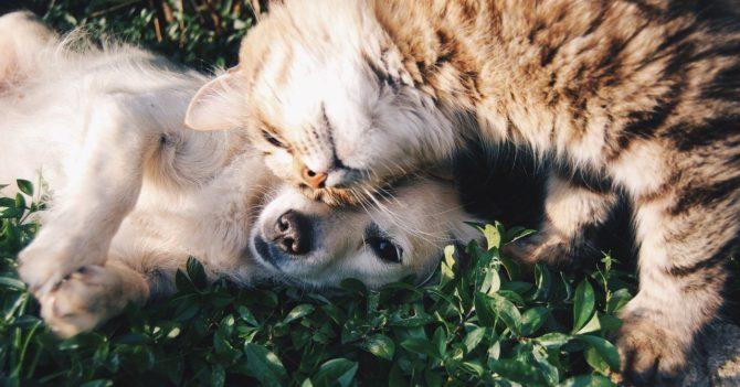 Как защитить котов и собак от блох и клещей