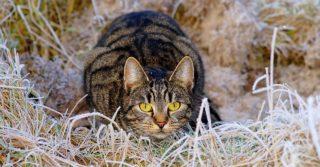 Почему важно обрабатывать кошек от паразитов и как выбрать средство