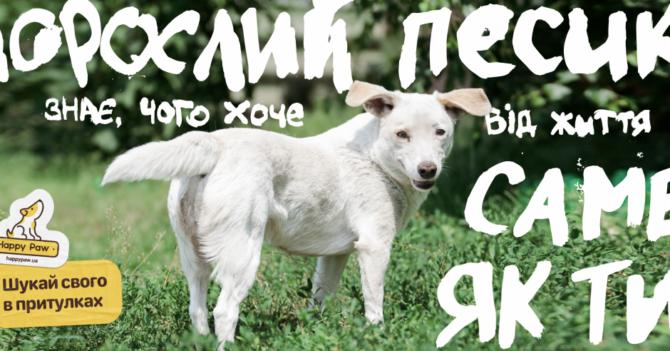 Ко Всемирному дню защиты животных Happy paw провел Международный урок доброты