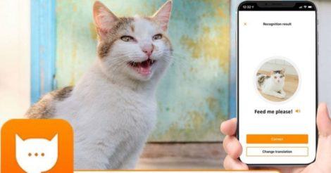 Инженер Amazon создал переводчик кошачьего языка