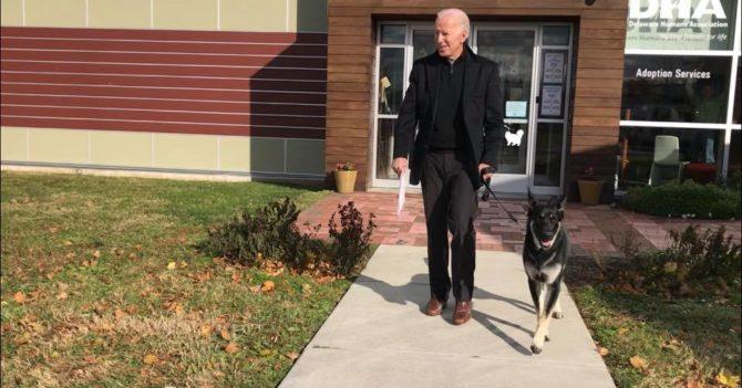 """Для собаки Джо Байдена, которую он забрал из приюта, проведут """"инаугурацию"""""""