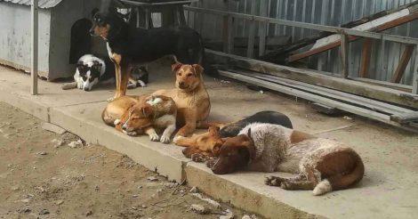 Как EVA помог 7 приютам для животных за счет отказа от новогодних подарков партнерам
