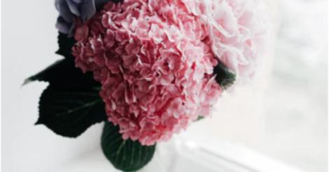 Выращивание саженцев цветов: 5 советов для успешного бизнеса
