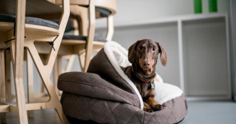 Как создать уют для собаки? Начните с характера!