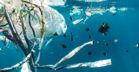 В океане образовалась новая экосистема: она из пластика