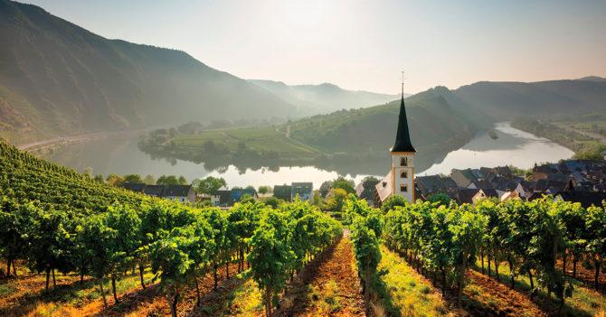Шпетбургундер, мюллер-тургау или гевюрцтраминер: Какие вина Германии стоит попробовать