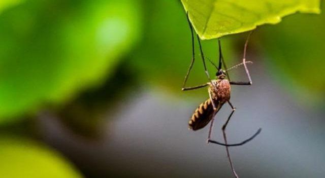 ВОЗ одобрила первую в истории вакцину от малярии